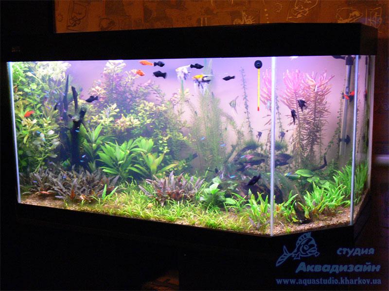 Дизайны аквариумов своими руками фото